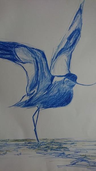 L'Avocette bleue